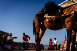 horse stands next to bride and groom